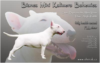 Bianca Mini Kalimero Bohemica