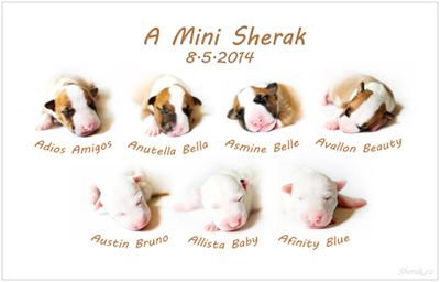 A-Mini Sherak
