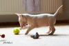 Bianca Mini Puppíček