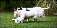 basket-bull