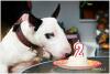 narozeninová bullparty 2013