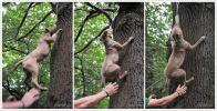 psi na stromě