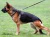 Mezinárodní výstava psů DUOCACIB Bratislava 14. a 15.5.2011