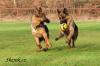 psí fotbalisti