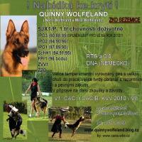 Quinny Wolfeland-nabídka ke krytí!!!
