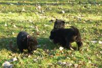 Chovatelská stanice Německých ovčáků