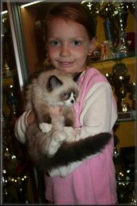 koťata Ragdoll s PP