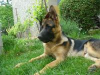 4,5 měsíční štěně NO