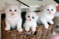 Tam koťata jsou vždy krásné