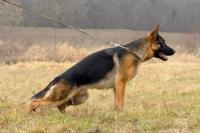 9 měsíců pes s PP
