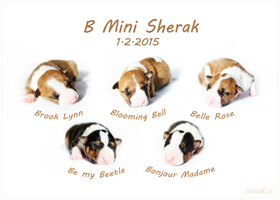 B-Mini Sherak