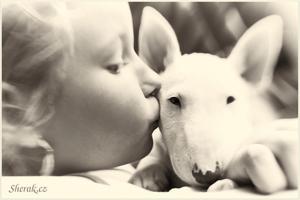 Náš život s bullíčkem: máme doma štěňátko