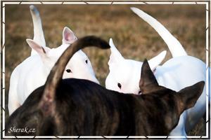 bull - Silvestr 2013