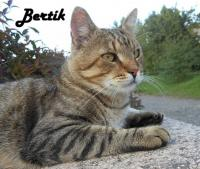 ztracený kocour evropské kočky
