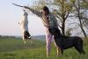 americký staffordšírský teriér Jeana