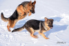 holky na sněhu