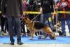 Mezinárodní výstava psů DUOCACIB Praha 3.11.2012